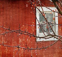 Berries and Barn by angelandspot