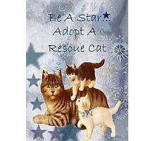 Adopt Rescue Humane Cat Photographic Print