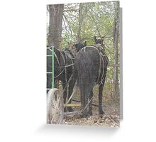 Percheron Team Greeting Card