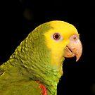 Parrot by neil harrison