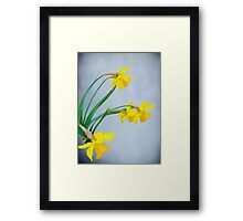 Daffodils with Raindrops Framed Print