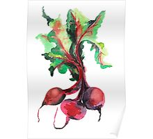 Watercolor image of beet root on white background.  Poster