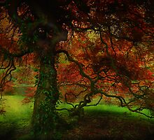The Red Tree by Linda Cutche
