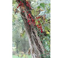 The Red Autumn Berries Photographic Print