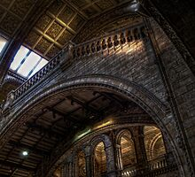 NHM Gallery by Alan E Taylor