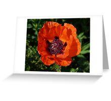 Big Red Poppy Greeting Card