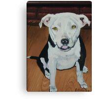 Jackie Dog Canvas Print