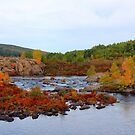Autumn In Newfoundland by Vickie Emms
