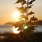 Sunset by Randall Robinson