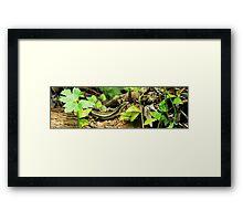 The Lizard Framed Print