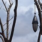 Flying Fox Forms by Stethaki