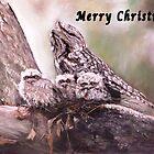 A Tawney Christmas by Lyn Green