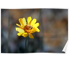 Bee and Desert Marigold Poster