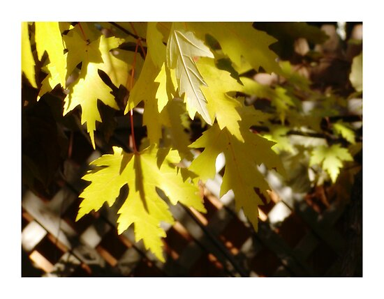 Yellow Leaves by TeaWater