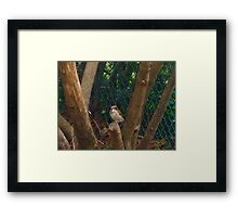 Time out for the battle with the squirrels for din dins Framed Print
