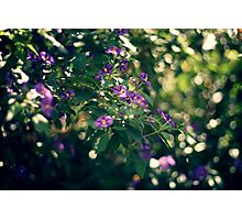 Spring Light Photographic Print