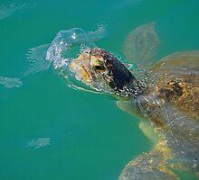 Sea Turtle Blowing a Bubble. by joevoz
