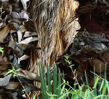 Mothers Nest by levipie