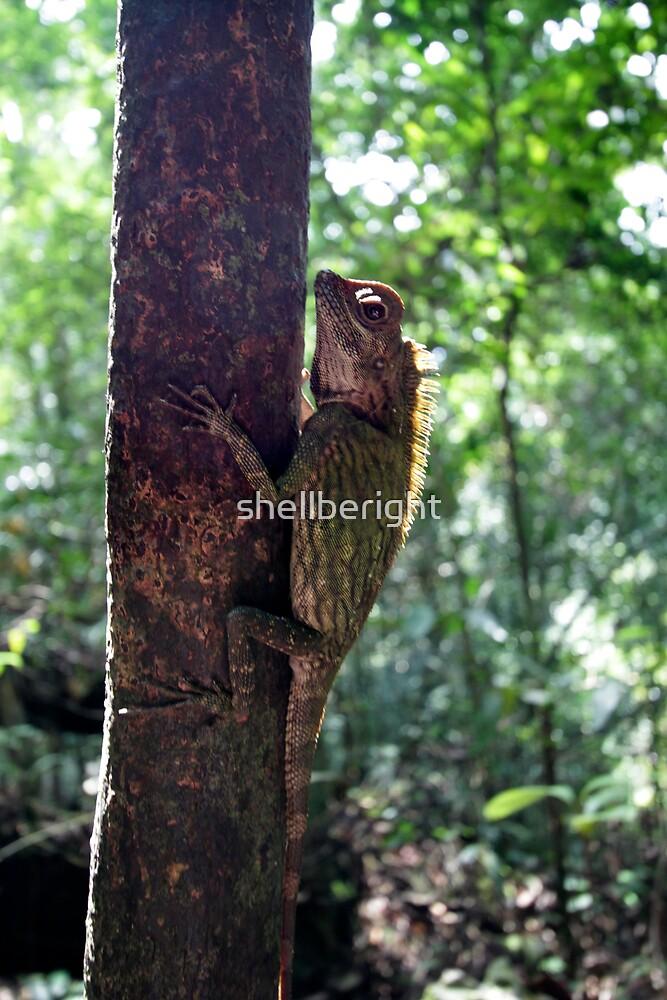 tree dweller by Michelle Jonker