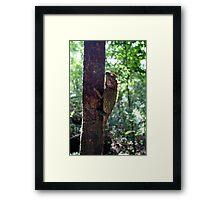 tree dweller Framed Print