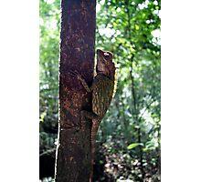 tree dweller Photographic Print