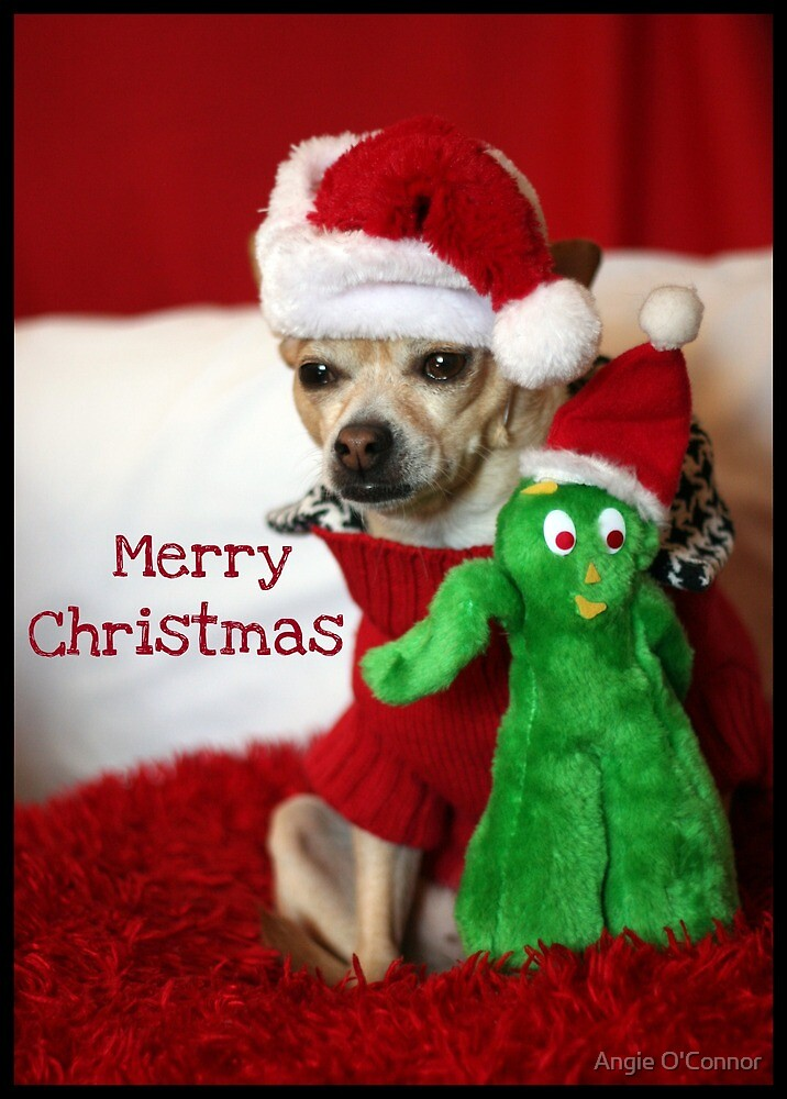 Holiday Greetings from Lacy & Gumby by Angie O'Connor