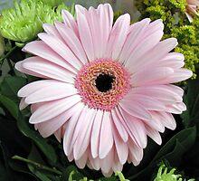 Pretty Pink Petals - Gerbera Delight by Kathryn Jones