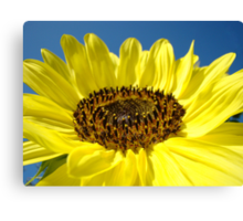 Sunflower Fine Art Prints Yellow Sunflowers Floral Canvas Print