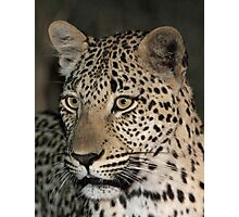 Leopard/duiker interaction 1( i am hunting tonight!) Photographic Print