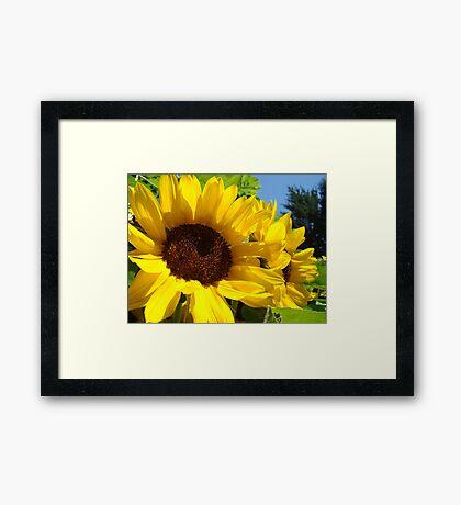 Summer Sunflowers Garden Fine Art Prints Framed Print