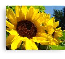 Summer Sunflowers Garden Fine Art Prints Canvas Print