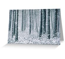 9.12.2011: In the Freezing Forest II Greeting Card