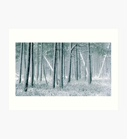 9.12.2011: In the Freezing Forest III Art Print