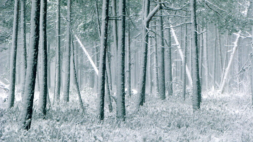 9.12.2011: In the Freezing Forest III by Petri Volanen