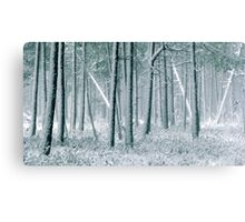 9.12.2011: In the Freezing Forest III Canvas Print