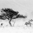 9.12.2011: Alone in the Blizzard I by Petri Volanen