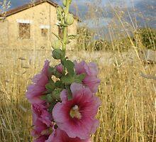 Hollyhock by graceloves
