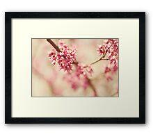 love blooms Framed Print