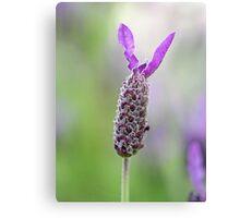 Lavender Solo Metal Print