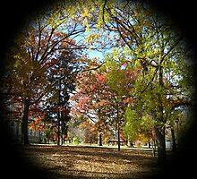 WeatherDon2.com Art 169 by dge357
