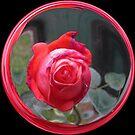 WeatherDon2.com Art 171 by dge357