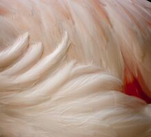 Pink Feathers by Elizabeth Tunstall