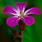 """"""" petite fleur ... """" by jean-jean"""