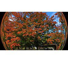 WeatherDon2.com Art 216 Photographic Print