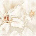 simply oleander by Teresa Pople
