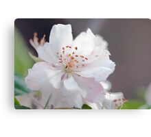 Blossom Delicacy Metal Print
