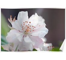 Blossom Delicacy Poster