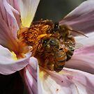 Bee March 2012 by saharabelle