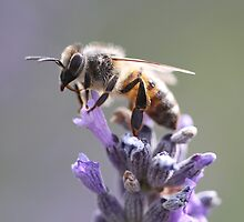 Bee May 2012 by saharabelle