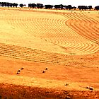 harvest patterns by jayview